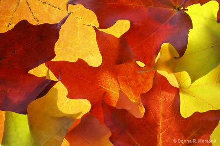 autumn Maple leaves abstract pattern