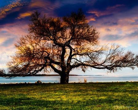 Bare Tree Angry Sky