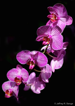 """""""Orchid #5"""""""