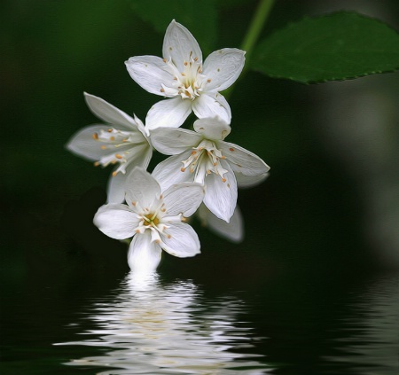Heavenly Flower 2