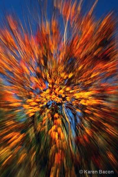 fall zoom