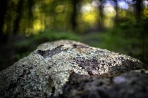 Lichens and Forest Light