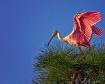 """Taking a """"Bird"""