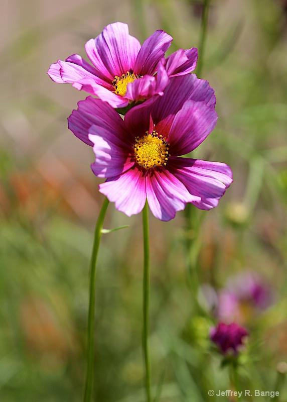 """""""Garden Beauty"""""""