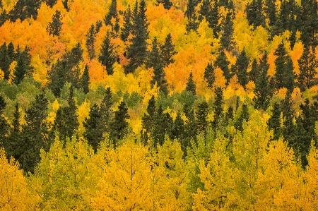 Fall Color at Kenosha Pass