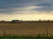 Fall Farm Work
