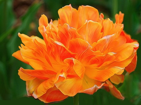 Perfectly Orange