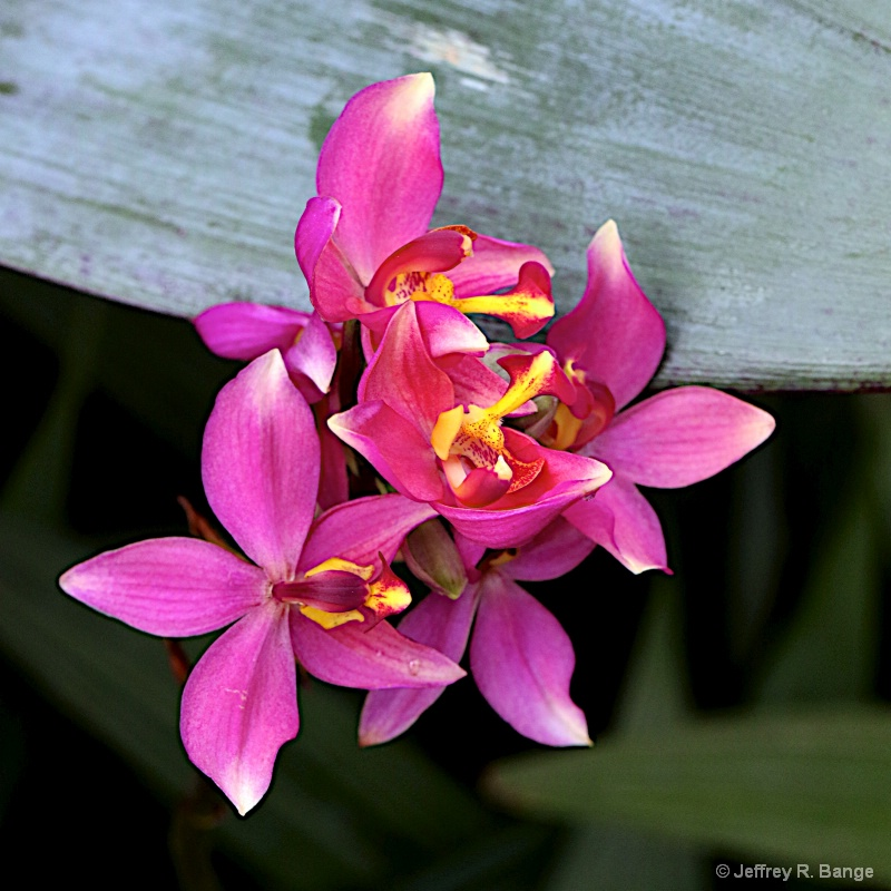 Orchid #8