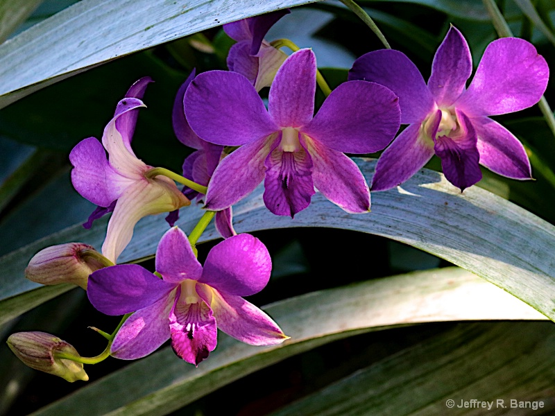 Orchid #11