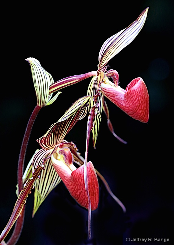Orchid #15