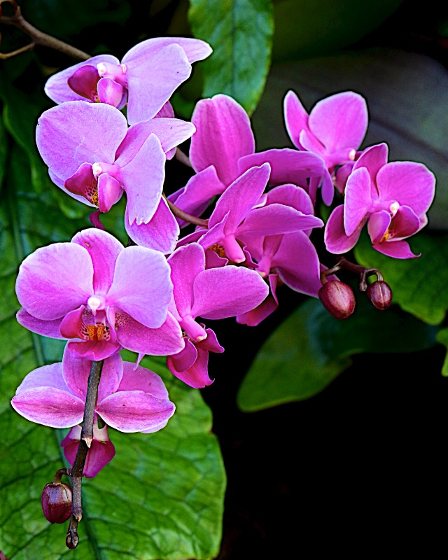 Orchid #18