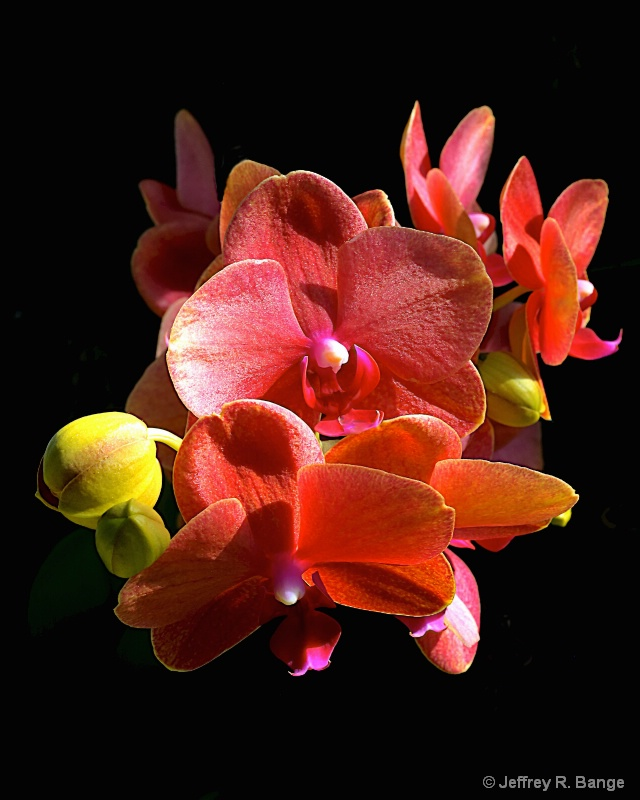 Orchid #22