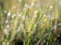 Sunlit Grasses 2