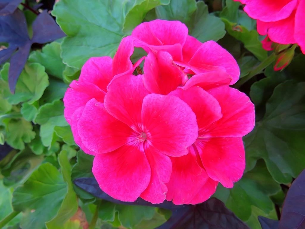 Back Door Flower Bush