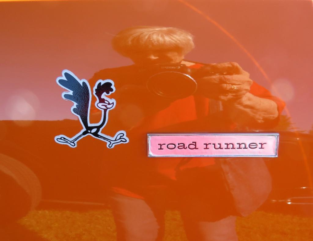 Road Runner And Friend - ID: 15453462 © Carolyn  M. Fletcher