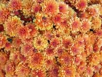 Full Frame Flowers