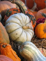 Pretty Pumpkin Group