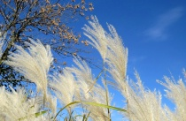 Fuzzy Grasses