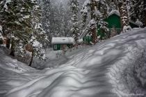 Draped in Snow