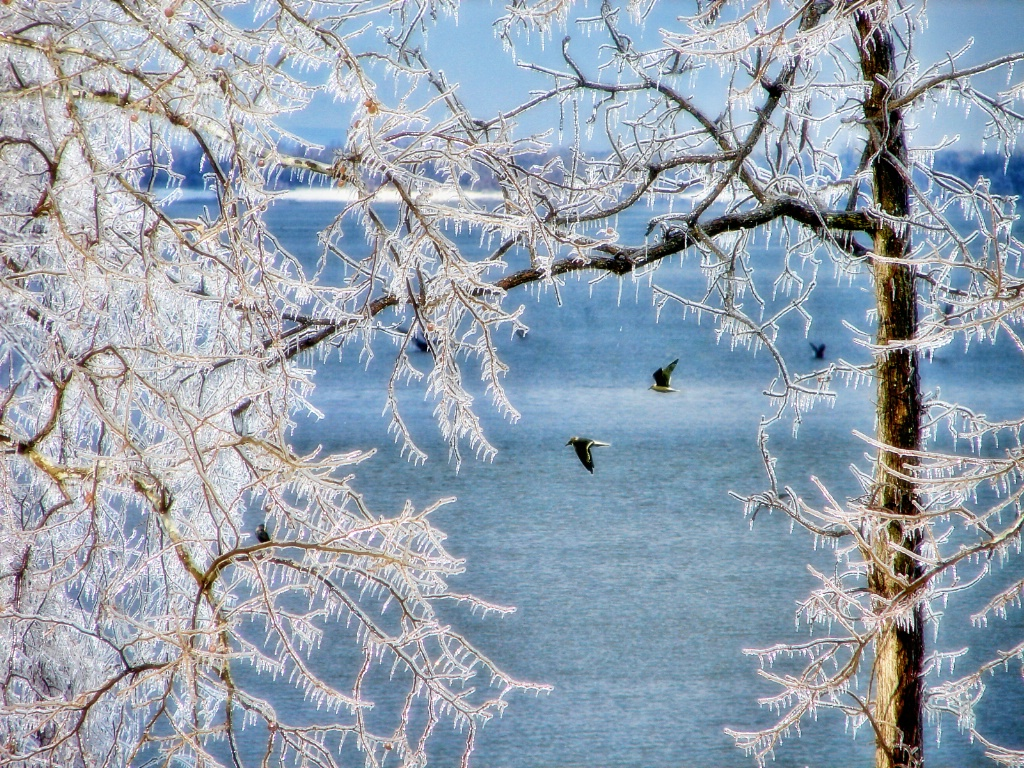 Icy Trees With Birds