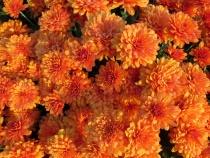 Full Frame Fall Flowers
