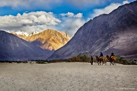 Camel Ride in Nubra Valley