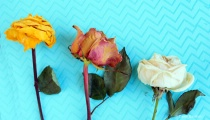 Dried Pastel Roses