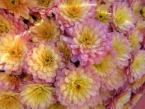 Fancy Full Frame Flowers