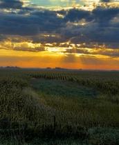 Rays Over Cornfield 2