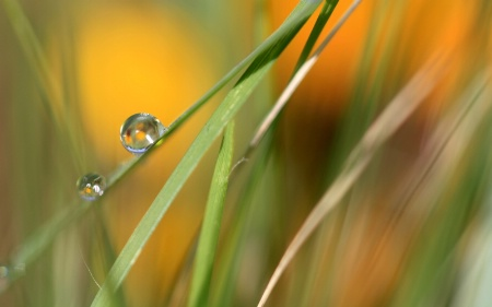 Soft Grass With Raindrops
