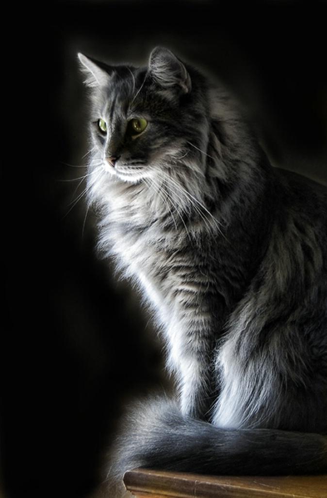 Backlit Kitty