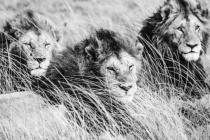 Mara Brothers