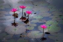 Art of lotus