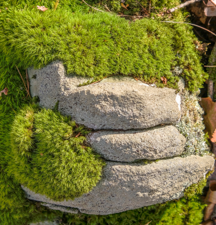 Fuzzy, mossy trio of rocks