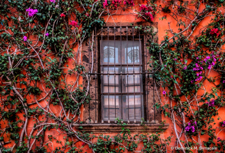 ~ ~ THE WINDOW TREATMENT ~ ~