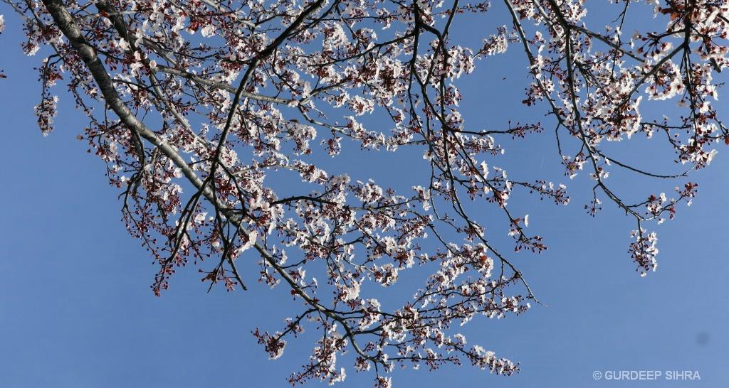 FLOWERS - ID: 15706835 © GURDEEP SIHRA