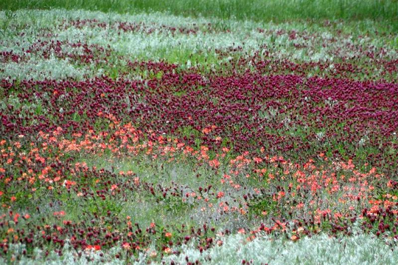 Eufaula Dam Site In Spring Color - ID: 15711150 © Carolyn  M. Fletcher