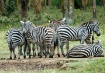 Stripes in Kenya