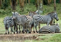 Stripes in Kenya