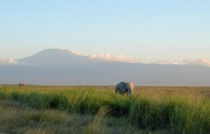 Elephants at Kilimanjaro