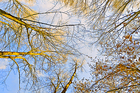 Branches bathed in the golden sunlight.