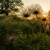 © Roxanne M. Westman PhotoID # 15725523: Spring in the meadows