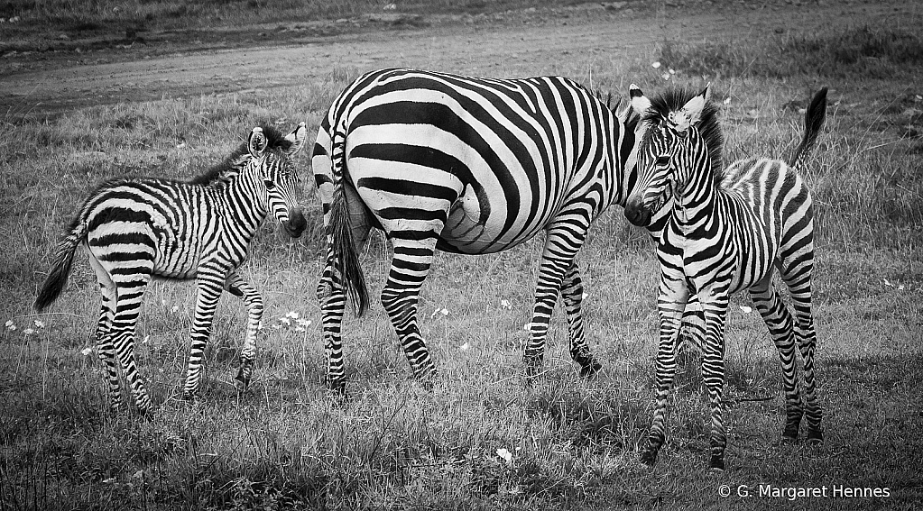 The Stripes have It!