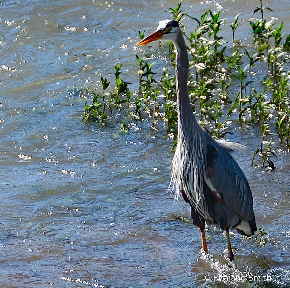 Large Bird - ID: 15725787 © Rita Jane Smith