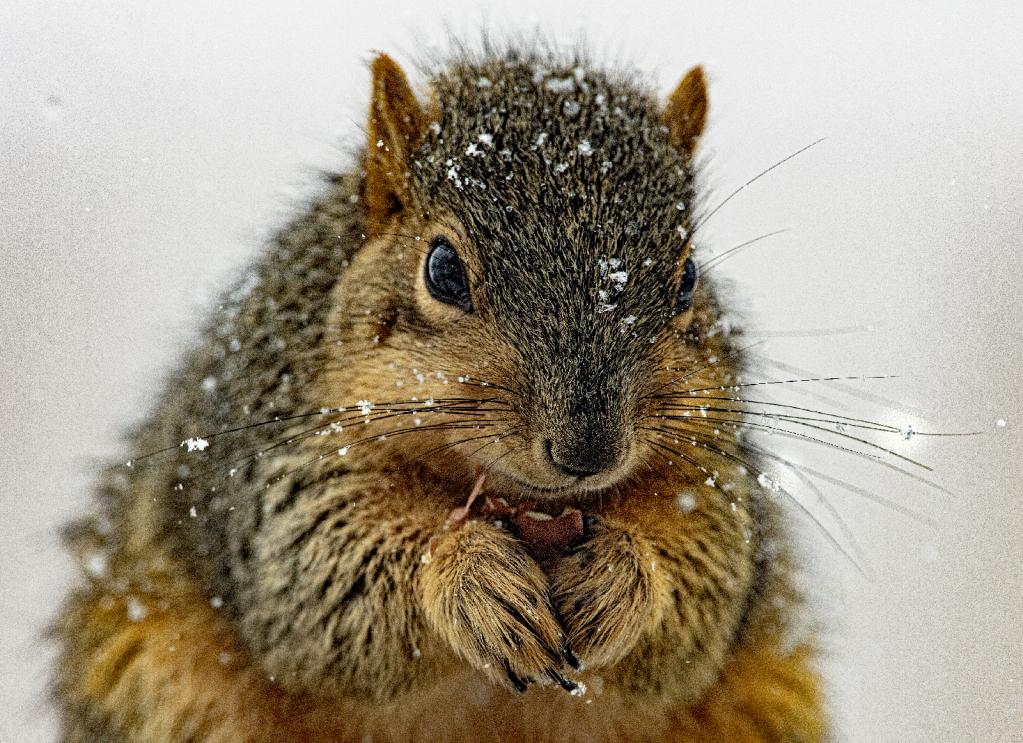 snowie snack