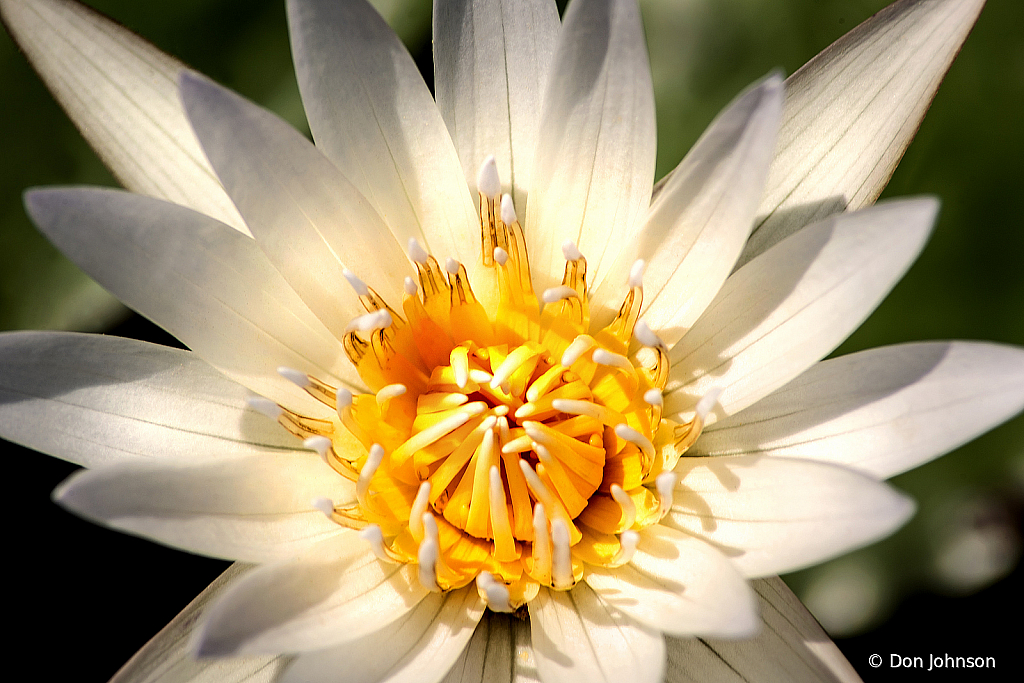 Stunning Water Lily 6-12-19 289