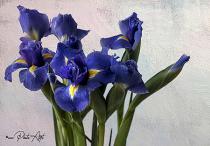 Iris Cascade
