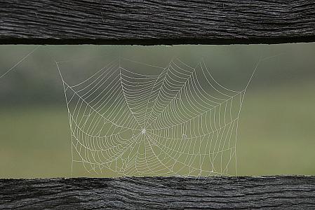 Web on a Fence