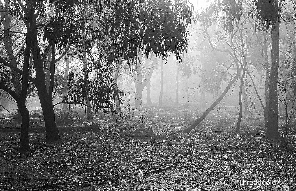 Misty Morning in the bush