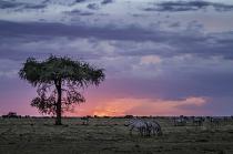 Splendid Sunset  6445
